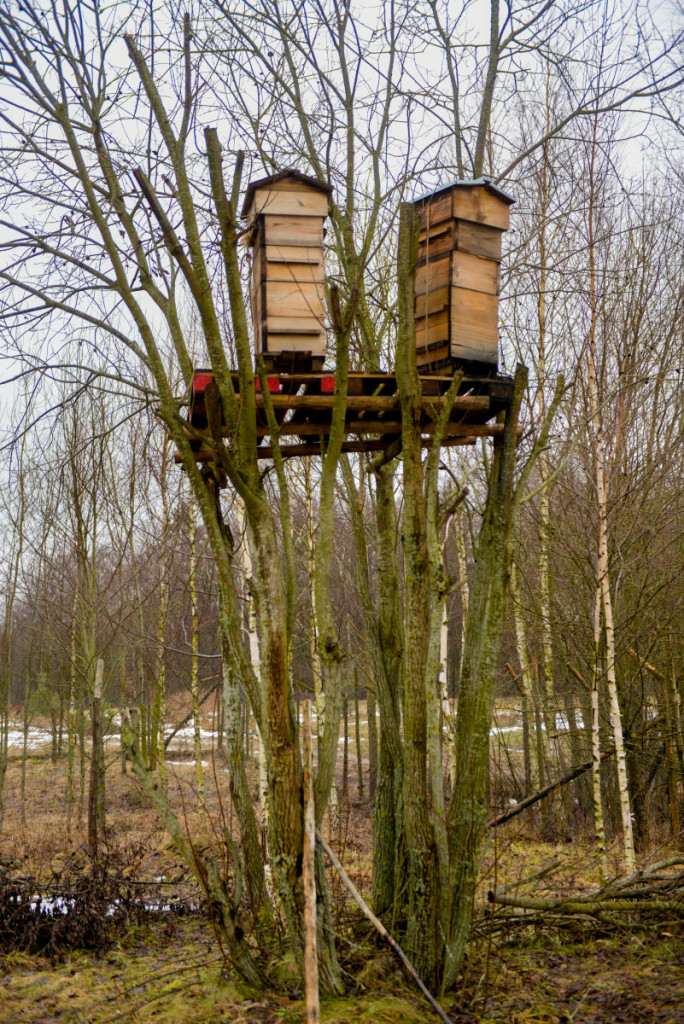 M. Krikščiūnas avilius kelia į keturių metrų aukštį, kad bitėms būtų mažiau drėgmės, o spiečiai lengviau rastų naujus namus. Asmeninio archyvo nuotr.