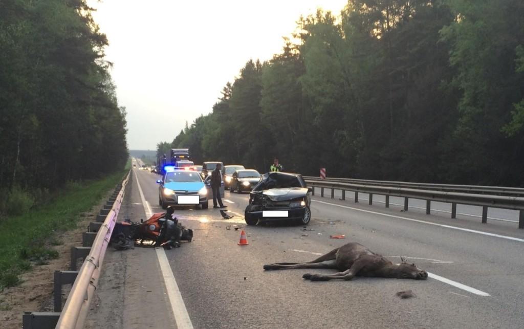 Pernai Lietuvoje užfiksuoti 3 185 automoibilių susidūrimo su gyvūnais atvejai.