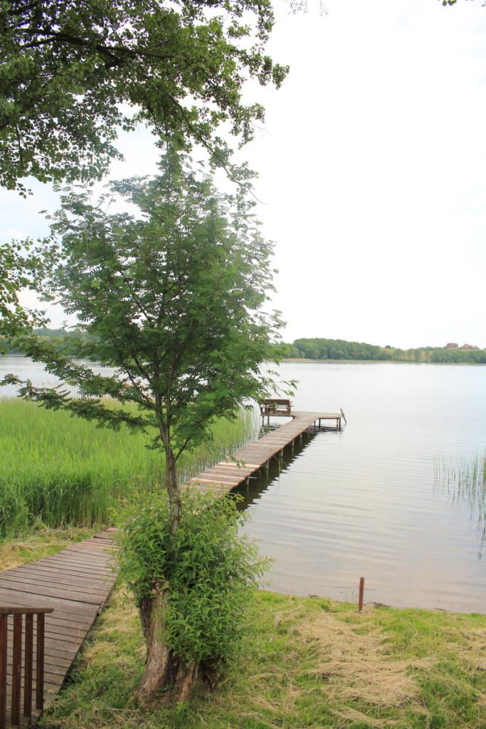 Prie pat ežero iš gluosnio kamieno išaugo šermukšnis. M. Ambrazo nuotr.