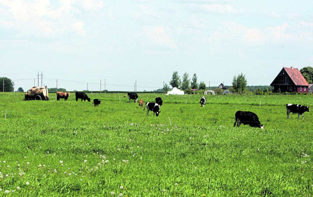 Pastaraisiais metais didžioji ES paramos dalis atitenka stambiesiems ūkiams, o smulkieji be paramos nyksta. Redakcijos archyvo nuotr.
