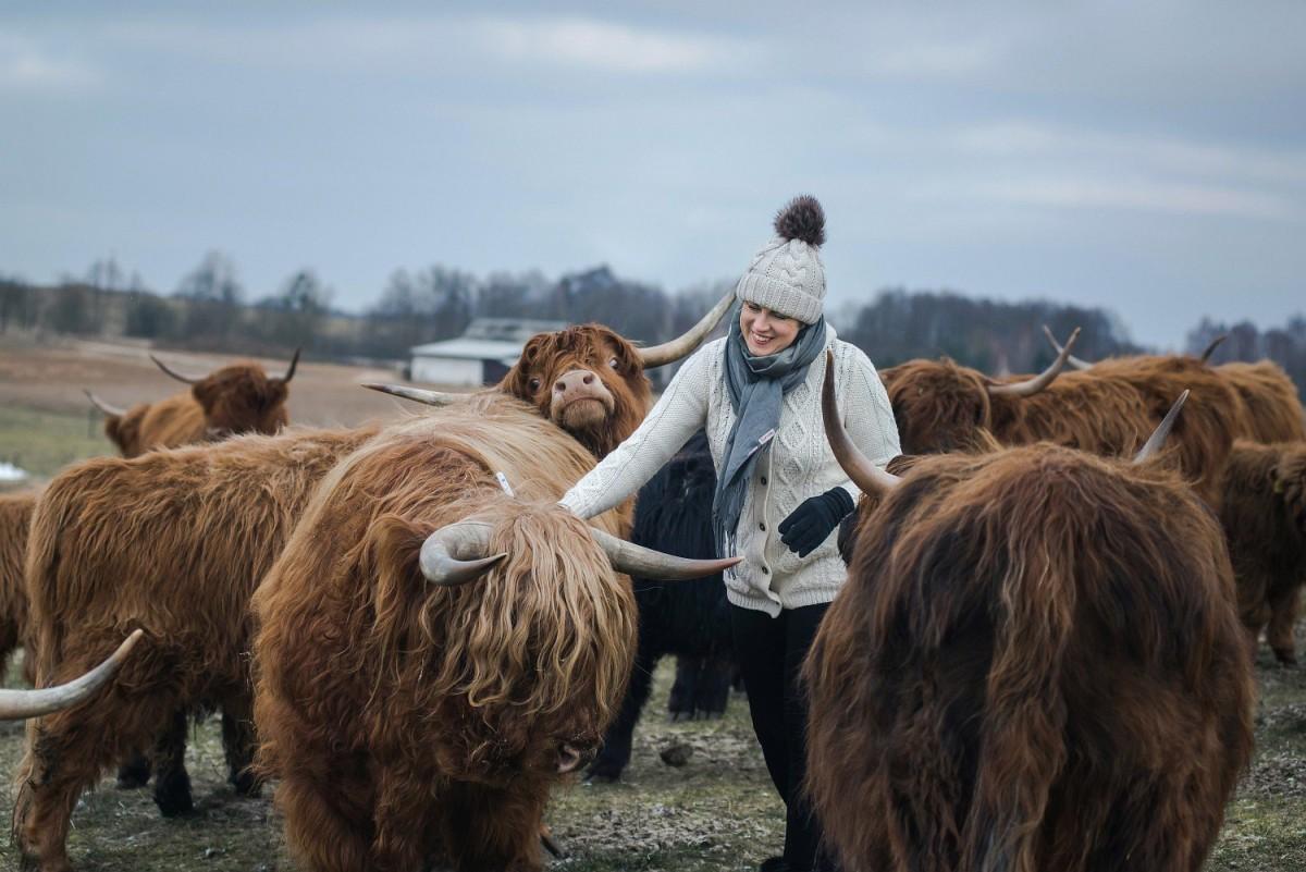 Kartą savaitėje ūkininkė, puoselėdama ilgaplaukius galvijus, juos iššukuoja. Asmeninio archyvo nuotr.