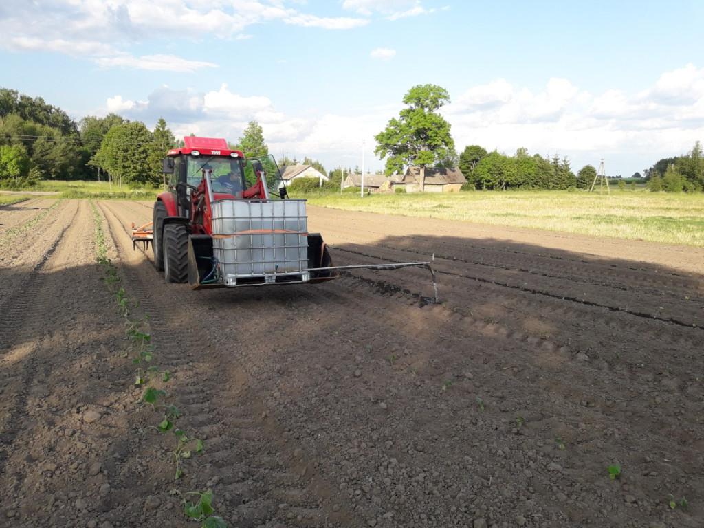 J. ir E.Amšiejų ūkyje moliūgų daigai buvo liejami pusiau rankiniu būdu, gelbėjo traktorius su įtaisyta 1 t talpos statine.