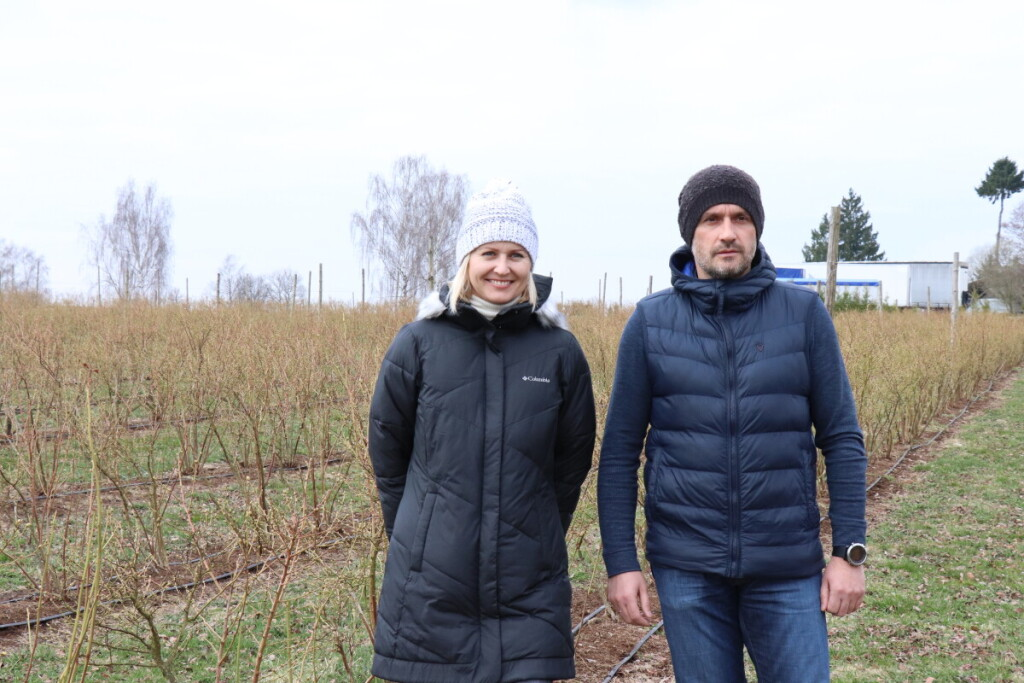 Ūkininkai Navagruckai auginti šilauoges Zizėnų kaime pradėjo prieš aštuonerius metus. Autorės archyvo nuotr.