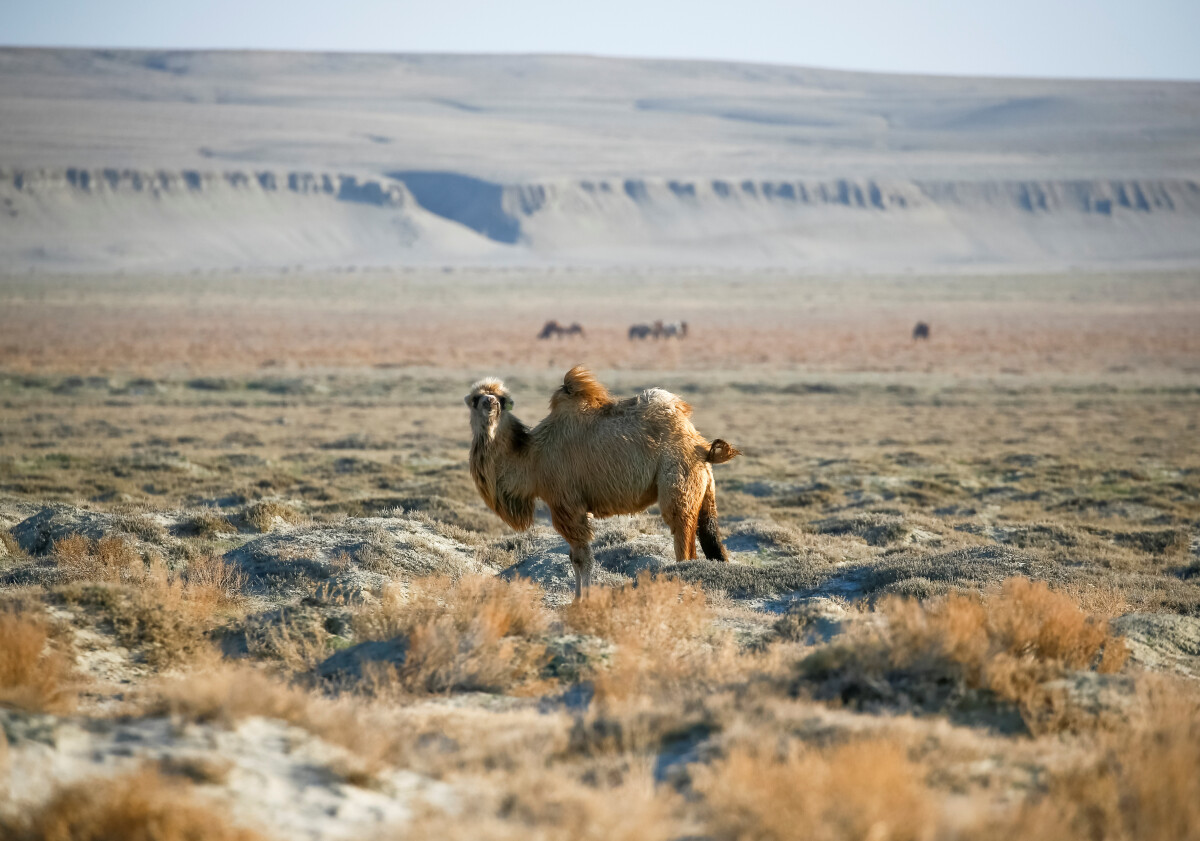Kazachstanas gali tapti atradimu daugeliui europiečių, ieškančių ne tik gražių peizažų, bet ir galimybės pažinti kitokią kultūrą ir istoriją.