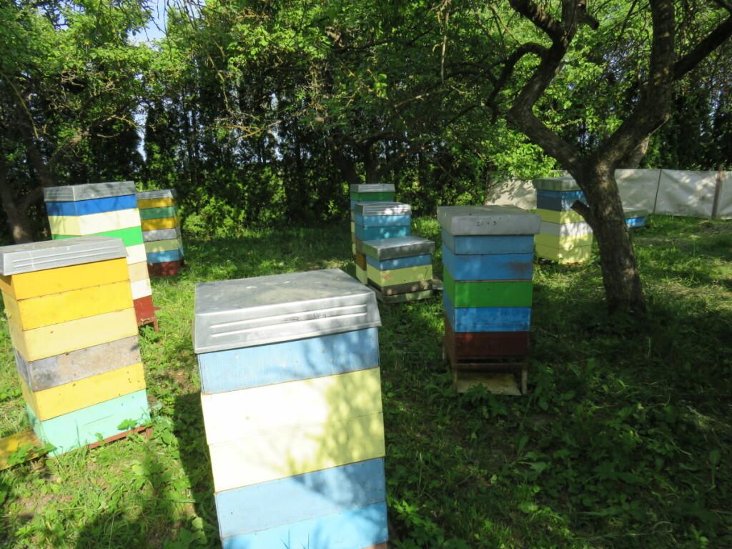 Šiuo metu J. Strokas šešiose skirtingose vietose laiko per 100 bičių šeimų. Asmeninio archyvo nuotr.