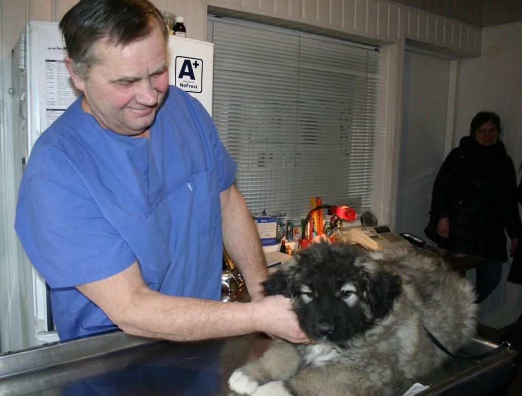 Veterinarijos gydytojas rūpinasi ne tik arklių, bet ir kitų gyvūnų sveikata. Asmeninio archyvo nuotr.