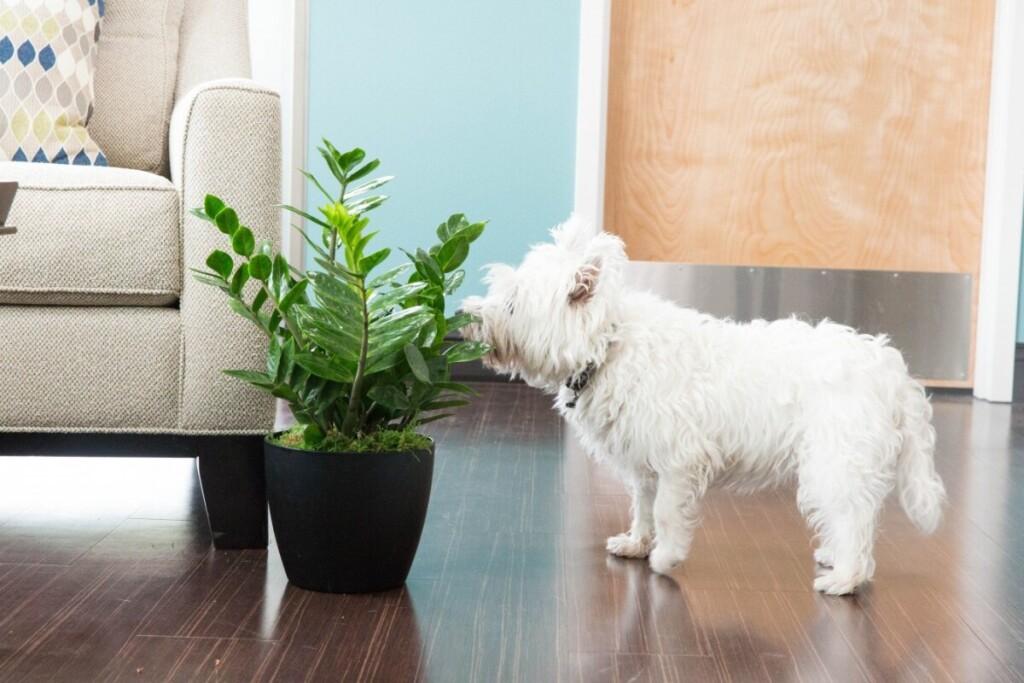 Labiausiai nuo pavojingų augalų gali nukentėti augintiniai