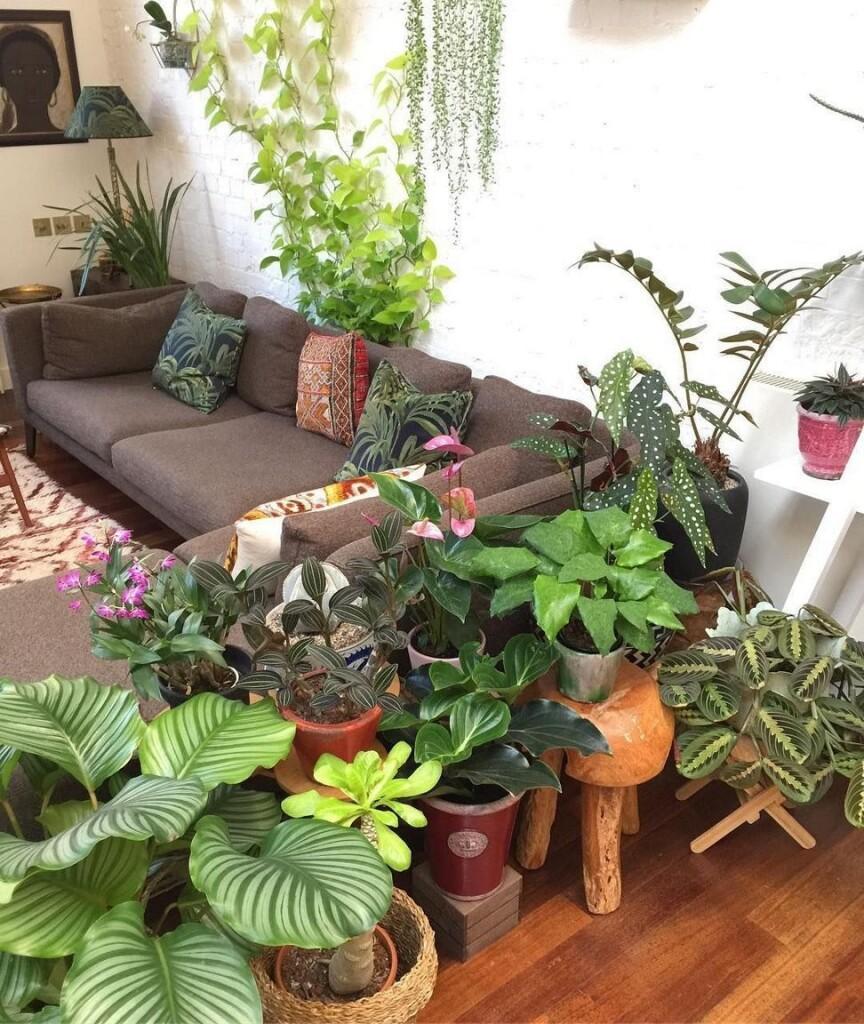 Kiekviena augalų rūšis turi savų paslapčių, keistenybių, įdomybių ar gudrybių, kaip geriau įsitvirtinti šioje žemėje.