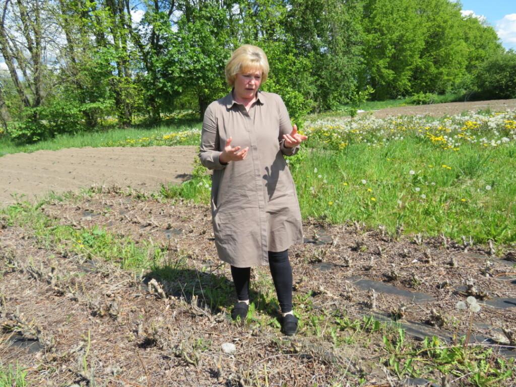Pynėja vytelių užsiaugina pati. Rudenį, nukritus lapams, iš šio laukelio jau bus galima prisipjauti vytelių.