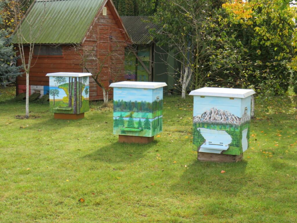 Tokiuose pasakų nameliuose gyvena Suvalkijos bitininko A.Kisieliausko bitutės.