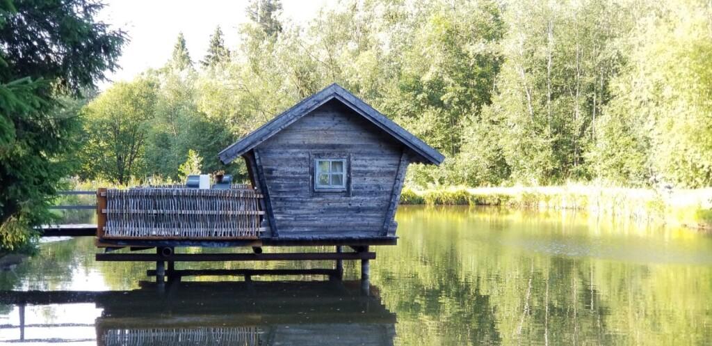 """Pro langus Inga mato tėvų namus ir mišką, kuriame įkurta poilsio erdvė """"Miško rojus""""."""