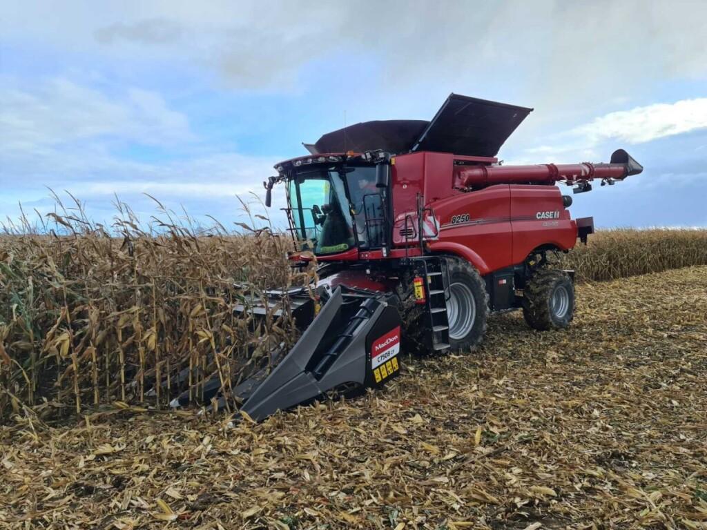 Vis daugiau ūkininkų augina grūdinius kukurūzus, nes jų panaudojimo galimybės plačios.
