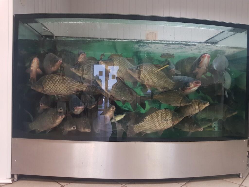 Išlaužo žuvis3