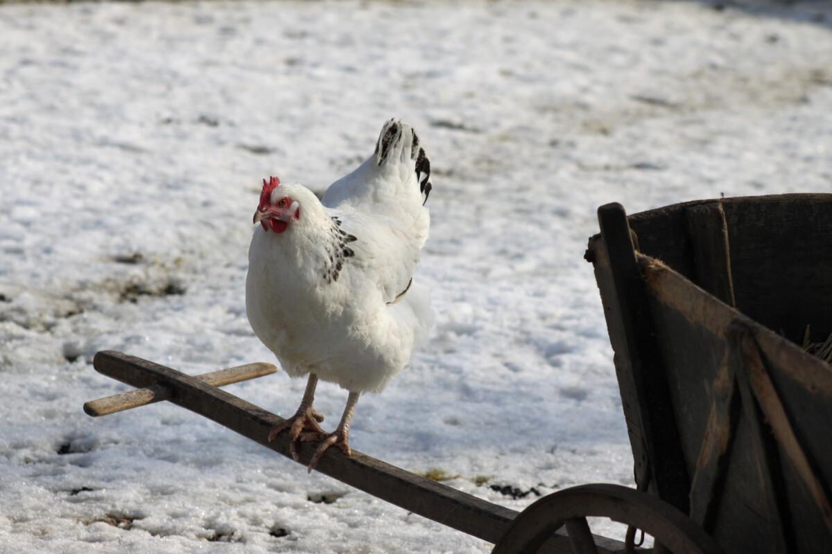 perkūno paukščių prekybos sistema v1 1